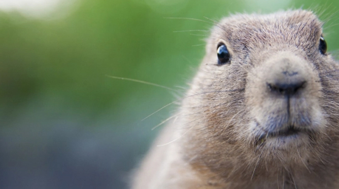 """""""An early spring,"""" says the groundhog?"""